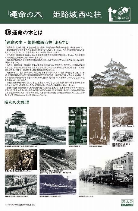 01運命の木紹介パネル_12